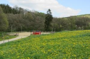 Reitplatz auf der Kesselmühle in Rheinland-Pfalz