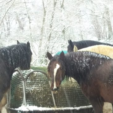 Schnee auf der Kesselmühle!